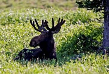 Ατζαμής κυνηγός πυροβόλησε ηλικιωμένο που έκανε την ανάγκη του