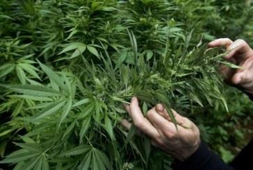 Συντάκτη μαριχουάνας ζητά η εφημερίδα Denver Post