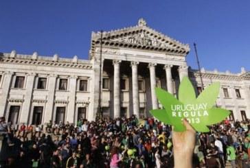 Από την παραγωγή στην κατανάλωση η κάνναβη στην Ουρουγουάη