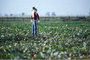 1.600.000 ευρώ στην Περιφέρεια Νοτίου Αιγαίου για την ενίσχυση νέων αγροτών