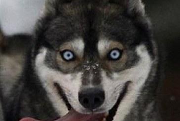 Βραβείο ερμηνείας για το… γάβγισμά του κερδίζει σκύλος στο «Gravity»