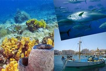 Σε διαβούλευση από το Δήμο Άνδρου και την Περιφέρεια: Αγροτική Ανάπτυξη 2014-20 & Διαχείριση της Θάλασσας και Ανάπτυξη της Αλιείας