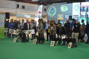 Η 15η 'Εκθεση Μορφολογίας Ελληνικού Ιχνηλάτη στην OUTDOOR EXPO 2015