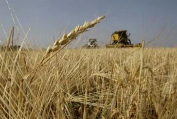 Πολύτιμα αγριόχορτα: H βιολογική καλλιέργεια «προστατεύει τη βιοποικιλότητα»