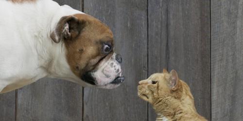 946582_dogsvscats02