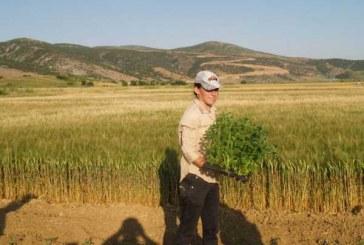 Στον ΟΓΑ μέσα στο εξάμηνο για νεοεισερχόμενους κατ' επάγγελμα αγρότες