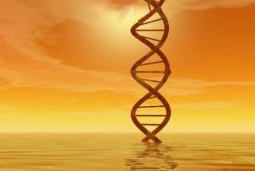 Εντοπίστηκε αντηλιακό γονίδιο!