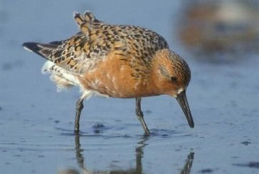 Πώς η θέρμανση στην Αρκτική σκοτώνει πουλιά στην Αφρική