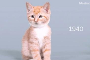 100 χρόνια γάτες: Το βίντεο που θα σου φτιάξει τη μέρα!