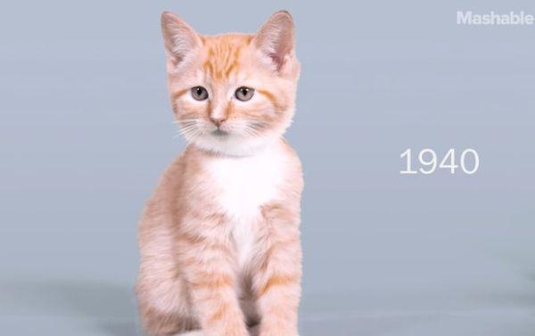 kitten-675bb2b5-885d-439d-a258-5dc0e7adf28a