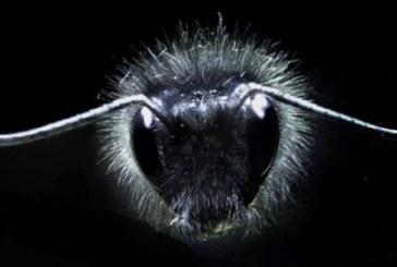 Πώς οι μέλισσες αντιλαμβάνονται τα ηλεκτρικά πεδία των λουλουδιών