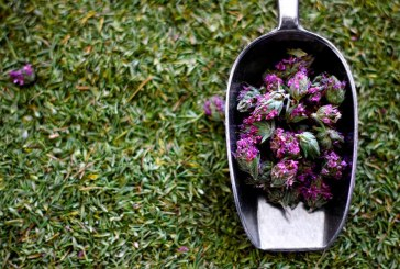Βιολογικά βότανα από συριανά χωράφια