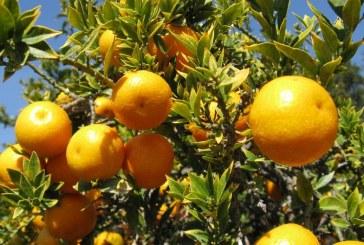 Περιφέρεια Νοτίου Αιγαίου: Χορήγηση στρεμματικής ενίσχυσης για τους καλλιεργητές πατάτας, εσπεριδοειδών και φασολιών