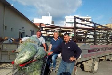Προσφορά Λαχανικών από το Περιφερειακό Φυτώριο Νοτίου Αυγαίου