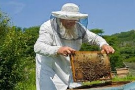 Περιφέρεια Ν. Αιγαίου: Προγράμματα Μελισσοκομίας 2017 – Αιτήσεις συμμετοχής έως 14 Ιουνίου 2017.