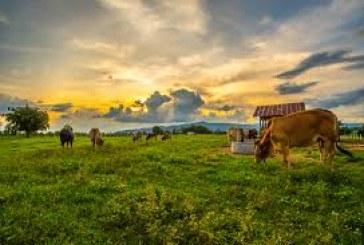 Περιφέρεια Νοτίου Αιγαίου: Άδεια διατήρησης κτηνοτροφικών εγκαταστάσεων – Αιτήσεις έως 30-6-2019