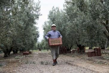 Νέο επιδότηση 14.000 ευρώ σε αγρότες με μικρές καλλιέργειες – Δείτε τα κριτήρια