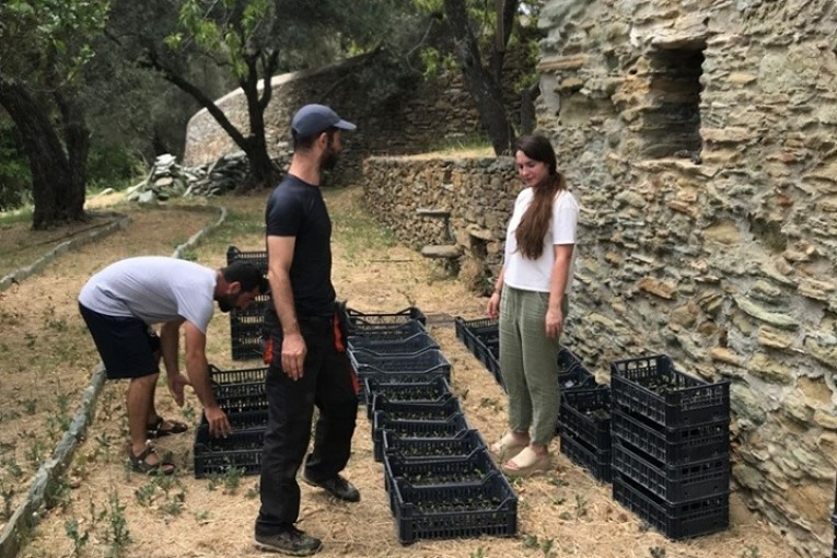 LIFE Andros Park: Άλλα 8.000 δενδρύλλια σκλήθρου στην Άνδρο για την αποκατάσταση των δασών της