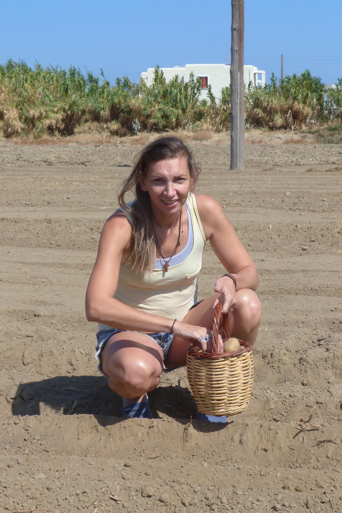 Φανή Χαλκιά φύτεμα πατάτας