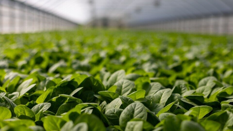 4k-wallpaper-agriculture-blur