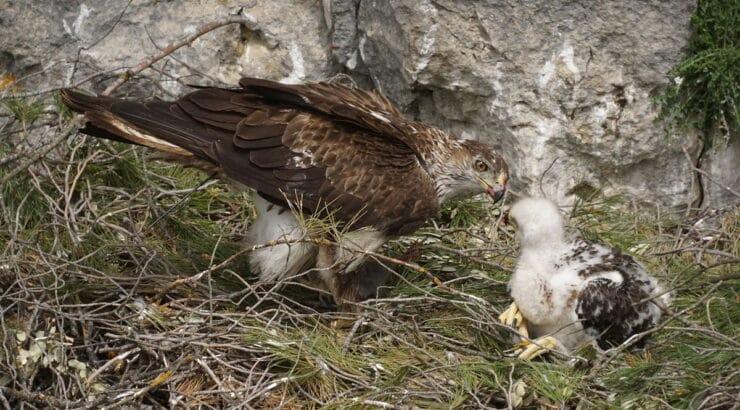 Επιστολή καταπέλτης του LIFE BonellieastMed για το Αιολικό Πάρκο στο Φραγκάκι στην Άνδρο