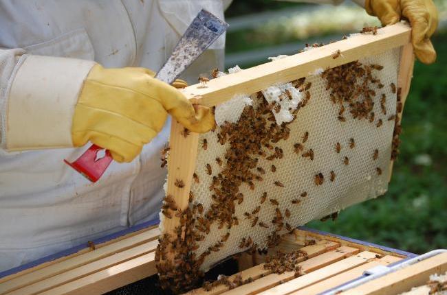 Ταχύρρυθμες εκπαιδεύσεις μελισσοκόμων