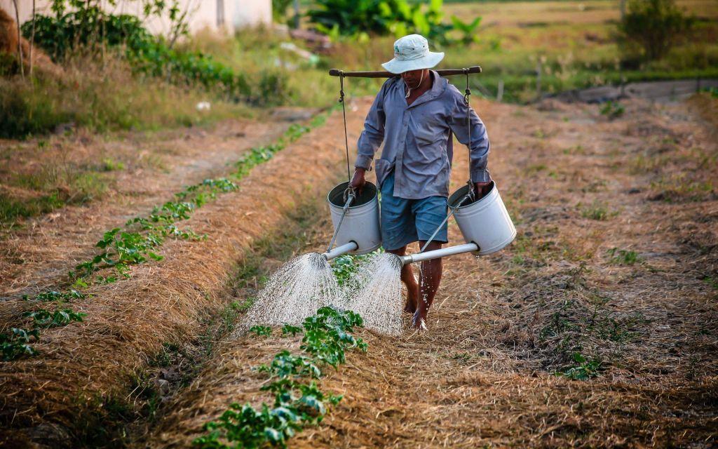 Διαδικτυακό σεμινάριο για την «Αγροτική Ατζέντα στην Ευρώπη μετά το COVID 19
