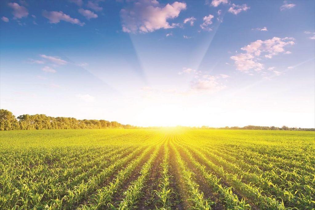 FAO: Ενίσχυση της παραγωγικότητας των αγροτών και επένδυση στην ψηφιακή καινοτομία