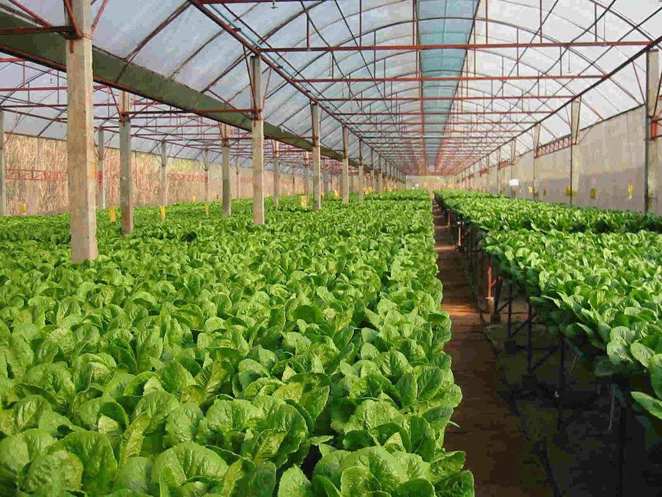 Αίτημα για ενίσχυση κι άλλων αγροτών από την Περιφέρεια Ν. Αιγαίου
