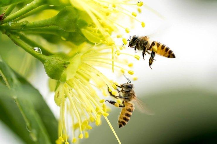 Διαβούλευση για τους κινδύνους των μελισσών