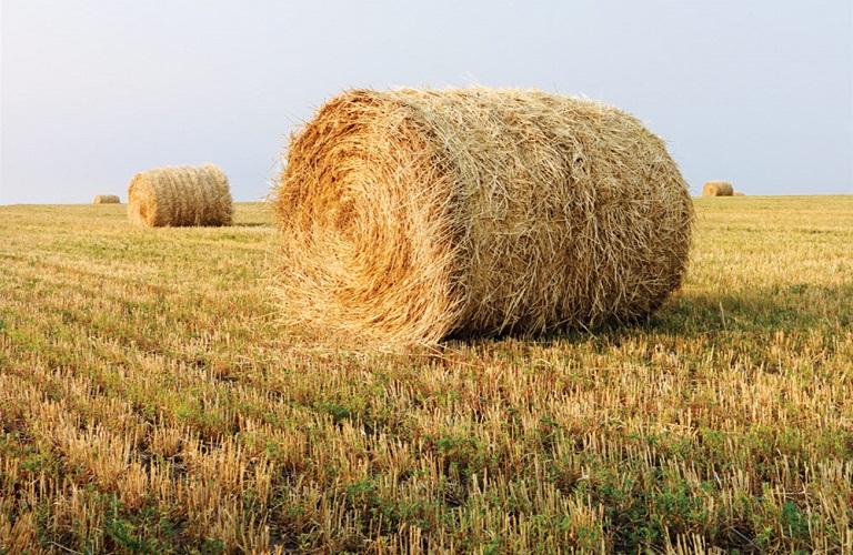 Διαδικτυακές συναντήσεις για την αγρο-βιομάζα