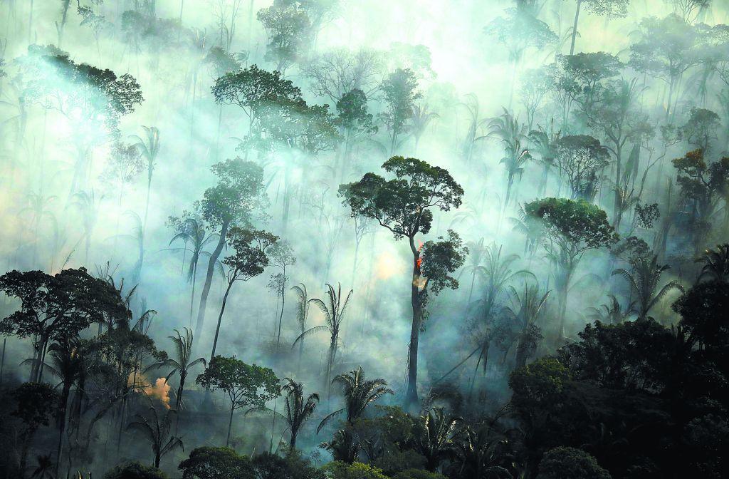 «Νεκρά ή ετοιμοθάνατα» τα δύο τρίτα των τροπικών υγρών δασών