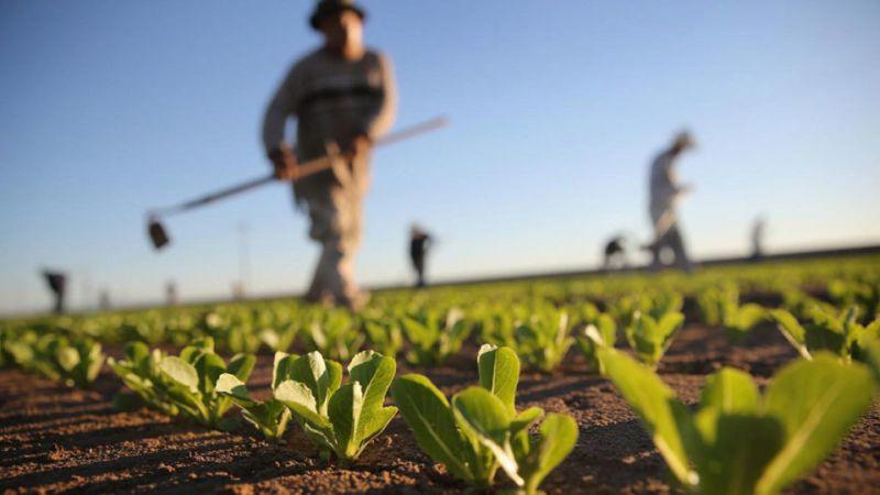 Λογιστικό Γραφείο Χρήστου Βουραζέρη & Συνεργατών: Πλήρες εγχειρίδιο αγροτών και αγροτικών θεμάτων