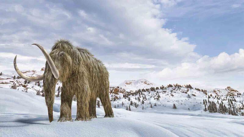 Επιστήμονες επαναφέρουν στη ζωή τα μαλλιαρά μαμούθ – Πολλά εκατ. για τους γίγαντες των παγετώνων